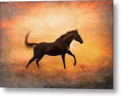 Sunset Gallop Metal Print by Pamela Hagedoorn
