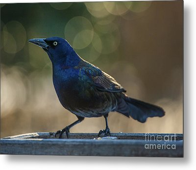 Sunset Grackle Metal Print