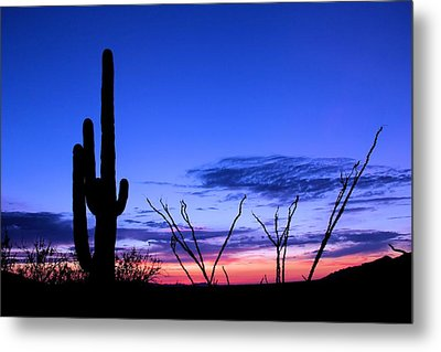 Metal Print featuring the photograph Sunset In Saguaro National Park by Elizabeth Budd
