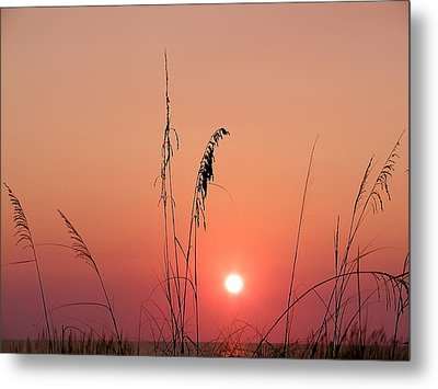 Sunset In Tall Grass Metal Print by Bill Cannon