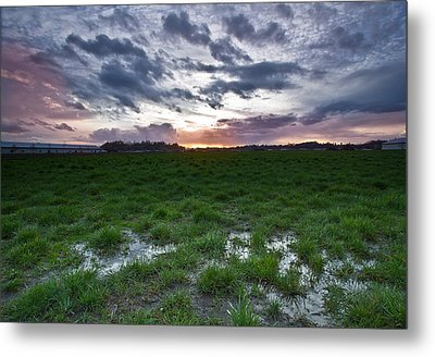 Sunset In The Swamp Metal Print by Eti Reid