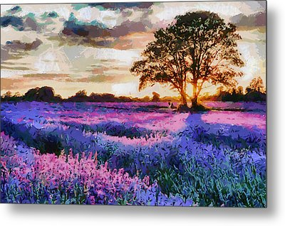 Sunset Lavender Field Metal Print