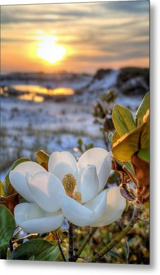 Sunset Magnolia Metal Print by JC Findley