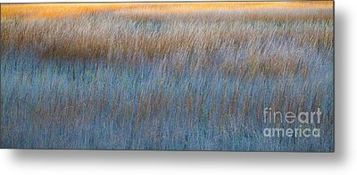 Sunset Marsh In Blue And Gold Metal Print by Jo Ann Tomaselli