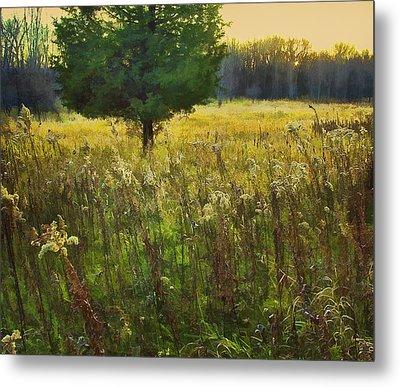 Metal Print featuring the photograph Sunset Meadow by John Hansen