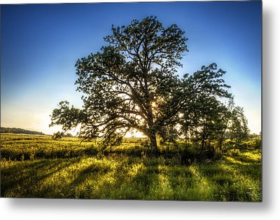 Sunset Oak Metal Print by Scott Norris