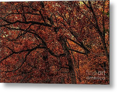 Sunset Oaks 2 Metal Print by Trey Foerster