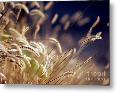 Metal Print featuring the photograph Sunset On Autumn Grass by Lincoln Rogers