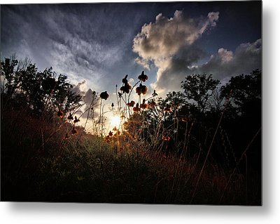 Sunset On Daisy Metal Print by Linda Unger