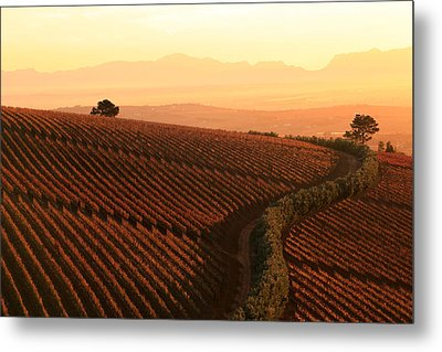 Sunset Over The Vineyards Metal Print