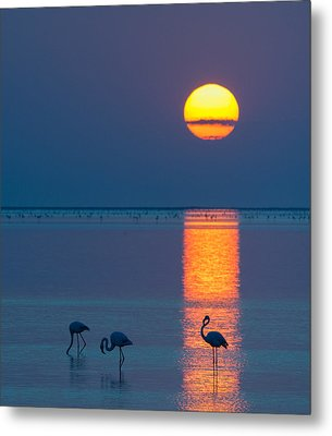 Sunset Over Walvis Bay - Flamingo Silhouette Photograph Metal Print by Duane Miller