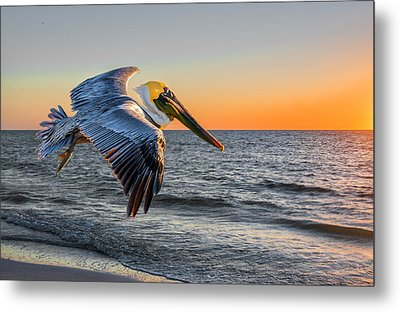 Metal Print featuring the photograph Sunset Pelican by Brian Tarr