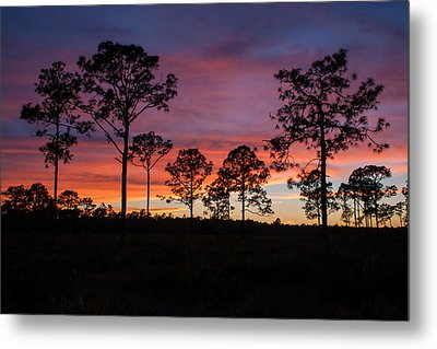 Metal Print featuring the photograph Sunset Pines by Paul Rebmann
