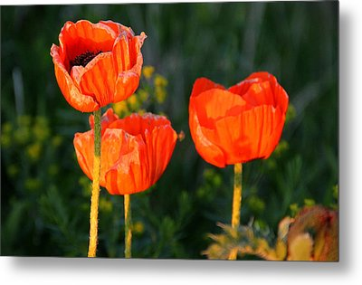 Metal Print featuring the photograph Sunset Poppies by Debbie Oppermann