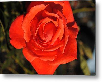 Sunset Rose Metal Print