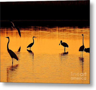 Sunset Silhouette Metal Print by Al Powell Photography USA