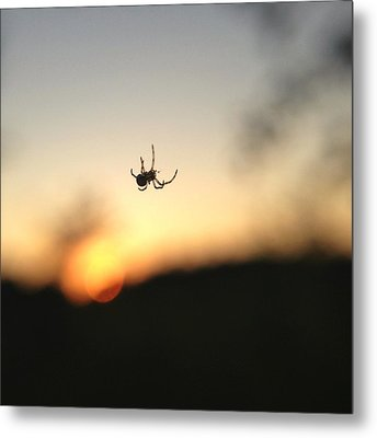 Metal Print featuring the photograph Sunset Spidey by Nikki McInnes