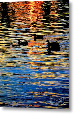 Sunset Swim Metal Print by Robyn King