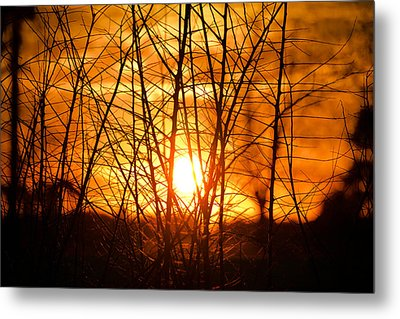 Sunset Through The Brush Metal Print