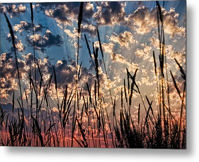 Metal Print featuring the photograph Sunset Through The Grasses by Don Schwartz