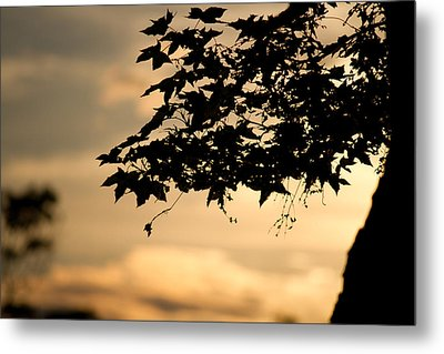 Metal Print featuring the photograph Sunset Through The Trees by John Hoey