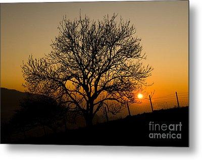 Sunset Tree Metal Print by Anne Gilbert