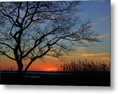 Metal Print featuring the photograph Sunset Tree In Ocean City Md by Bill Swartwout