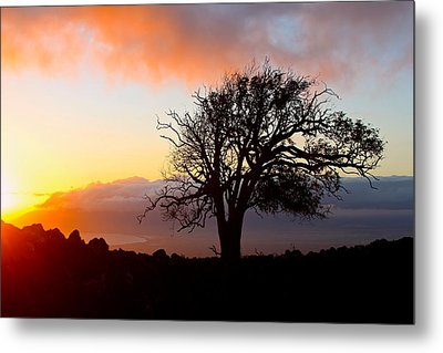 Sunset Tree In Maui Metal Print by Venetia Featherstone-Witty