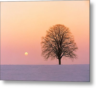 Sunset View Of Single Bare Tree Metal Print