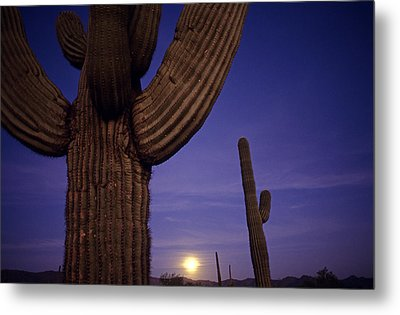 Sunset With Moonise Behind Saguaro Cactus In Desert Southwest Ar Metal Print