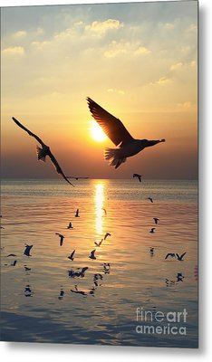 Sunset With Seagull Metal Print