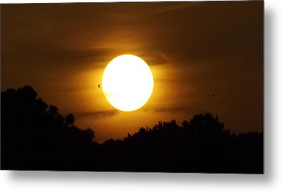 Sunset With Soaring Birds Metal Print by Keegan Hall