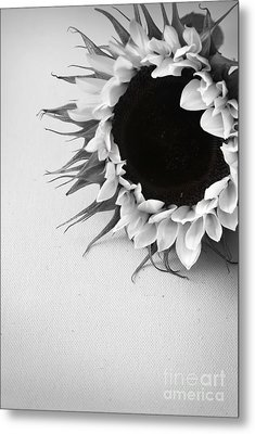 Sunshine 2 Metal Print by Eden Baed
