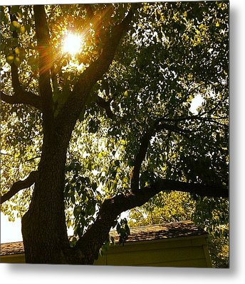 Sunshine Metal Print by Christy Beckwith