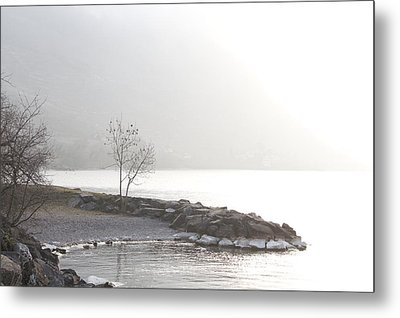 Metal Print featuring the photograph Sunshine by Colleen Williams