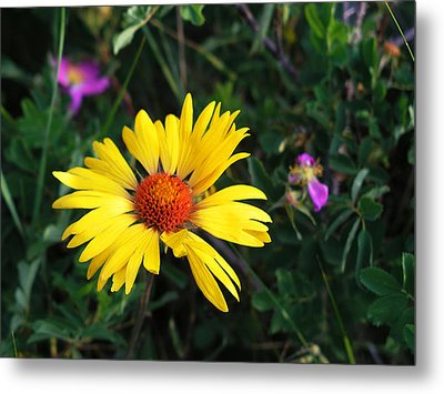 Sunshine Metal Print by Craig T Burgwardt