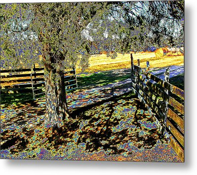 Metal Print featuring the photograph Sunshine Down On The Farm by Diane Miller