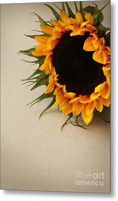 Sunshine Metal Print by Eden Baed
