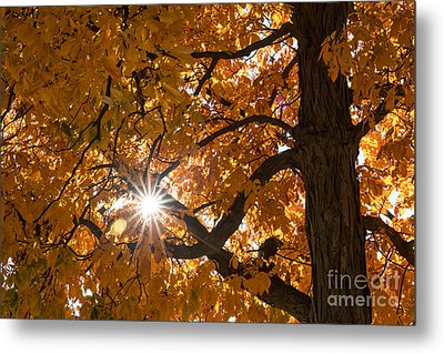 Sunshine Gold Metal Print