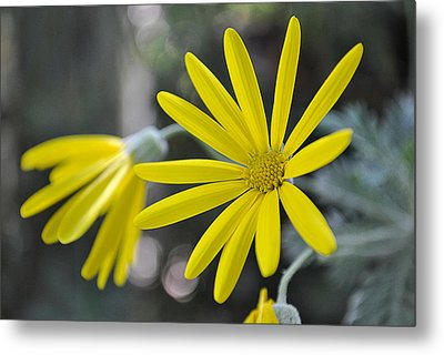 Sunshine In A Flower Metal Print