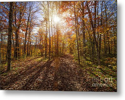 Sunshine In Fall Forest Metal Print