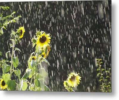 Sunshine In The Rain 2 Metal Print by Elizabeth Sullivan
