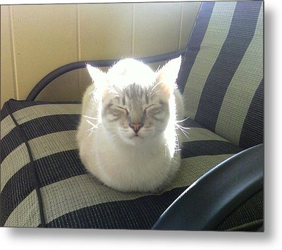Sunshine Kitty Metal Print