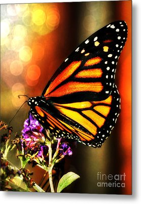 Sunshine Monarch  Metal Print