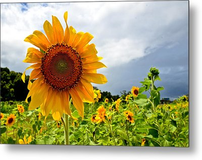 Sunshine On A Cloudy Day Metal Print by AnnaJo Vahle