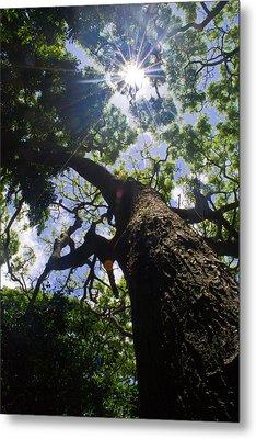 Sunshine Through The Trees Metal Print by Matt Radcliffe