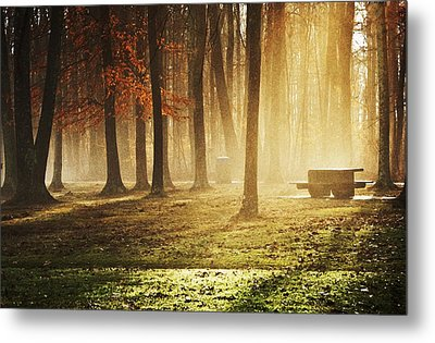 Sunshine Through The Woods Metal Print by Diana Boyd
