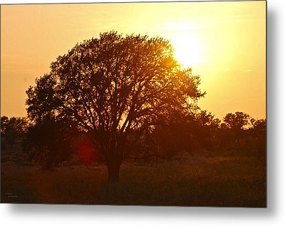Suntree Metal Print by Teresa Dixon