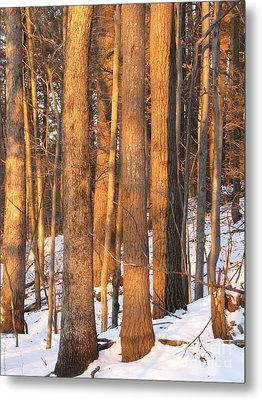 Metal Print featuring the photograph Sunwarmed In Winter by Melissa Stoudt