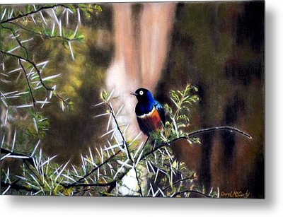 Superb Starling Metal Print